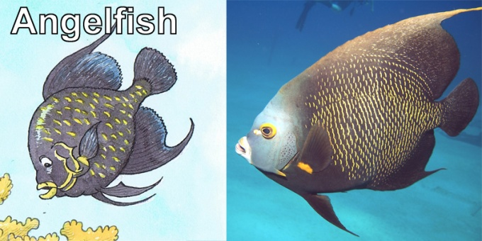 Angelfish.jpg